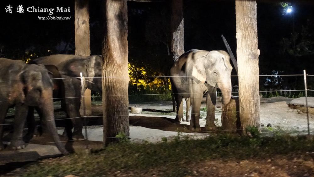 泰國.清邁│世界上最大的夜間動物園,Chiang Mai Night Safari門票+接送攻略
