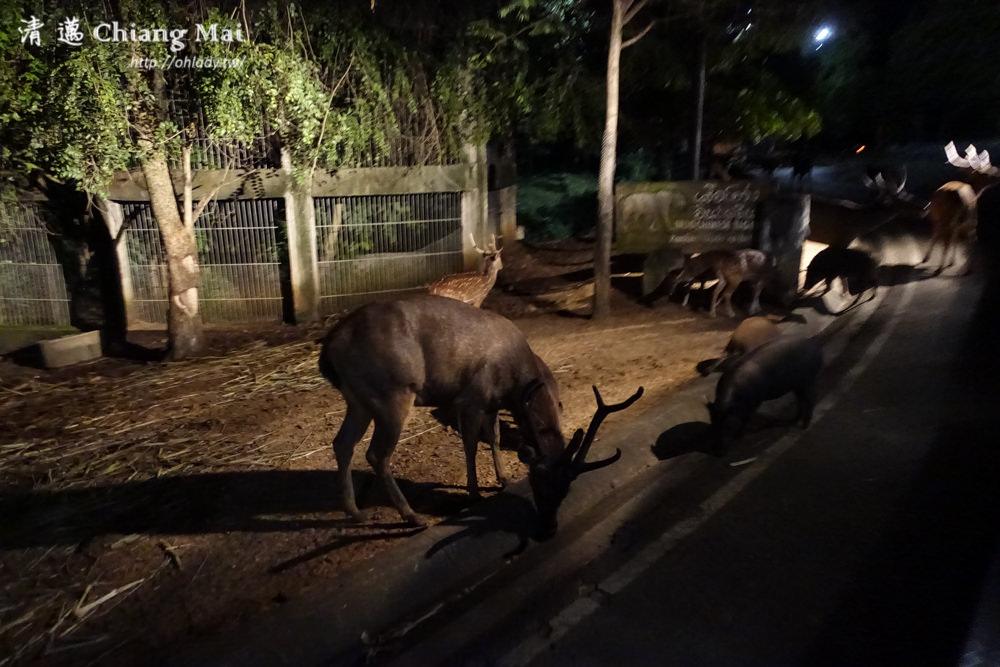 泰國自由行清邁夜間動物園門票