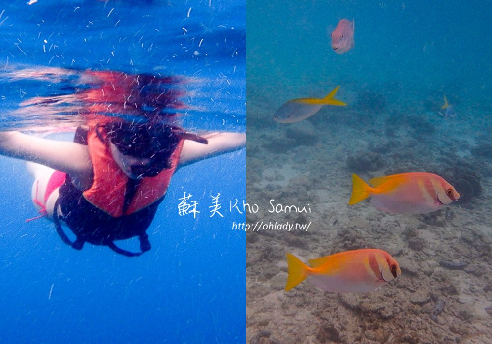 泰國.蘇美│快艇破浪前進龜島、南緣島,蘇美浮潛必去的最美麗島嶼